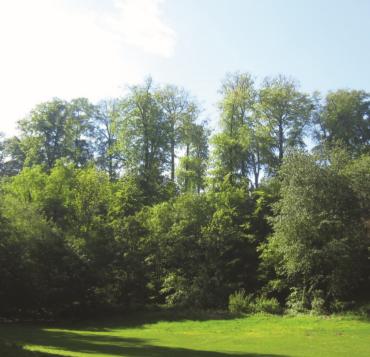 séance info arbres parc duden